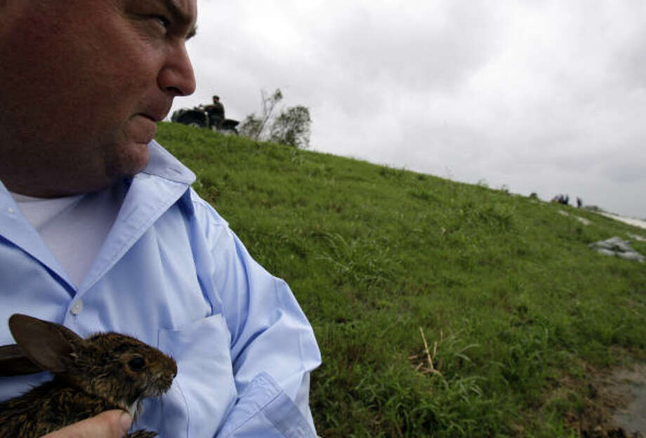Plaquemines Parish President Billy Nungesser Jr. holds a baby rabbit he rescued Friday as he looks at a levee where water is being blown over by the winds from Hurricane Ike in Scarsdale, La. Photo: Alex Brandon, AP