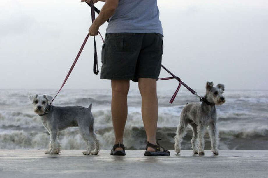 Accompanied by her miniature schnauzers, Sammi and Chuy, Carol Clegg of Houston watches the waves come in as Hurricane Ike approaches the seawall in Galveston on Friday. Photo: Johnny Hanson, Houston Chronicle