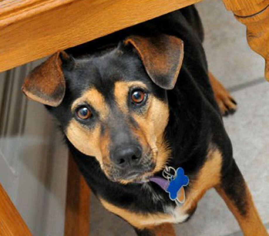 Sophie Photo: H_Dean_Clark, PetsHouston