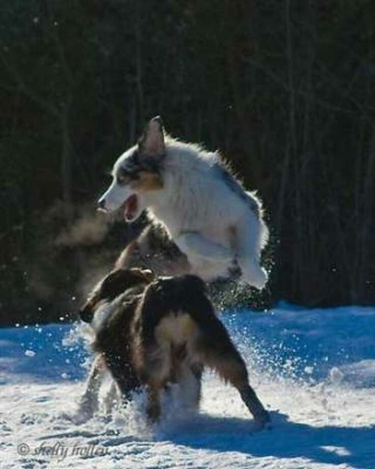 Born for this. Photo: Enphaze, PetsHouston