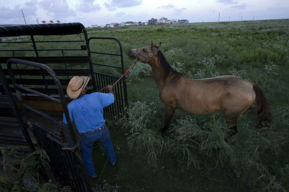 "Roped in | Rey Villarreal loads one of his horses into a trailer as he prepares to drive them north out of harm's way. ""This area floods, so we've got to get them out,"" he said. 