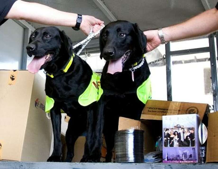 Lucky and Flo, black Labrador retrievers owned by the Motion Picture Association of America, sit by boxes of pirated optical discs of the TV series Friends they discovered at the main air cargo complex in Sepang, Malaysia, on Tuesday. Photo: ANDY WONG, ASSOCIATED PRESS