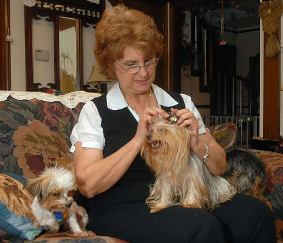 Linda Eiswirth puts a ribbon on a Yorkie. She founded the Yorkie and Small Dog Rescue of Conroe. She is fostering the dogs until they can be adopted. Photo: David Hopper, For The Chronicle