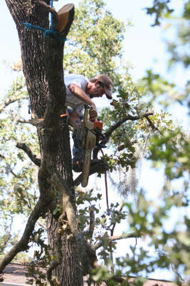 Andrew Tartick of St. Matthew's Tree Services, based in Buffalo, NY, cuts tall branches at house on Woodedge Drive. Photo: Thomas Nguyen, For The Chronicle