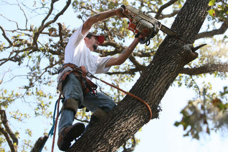 Andrew Tartick of St. Matthew's Tree Services, based in Buffalo, NY, cuts tall tree branches at house on Woodedge Drive. Photo: Thomas Nguyen, For The Chronicle