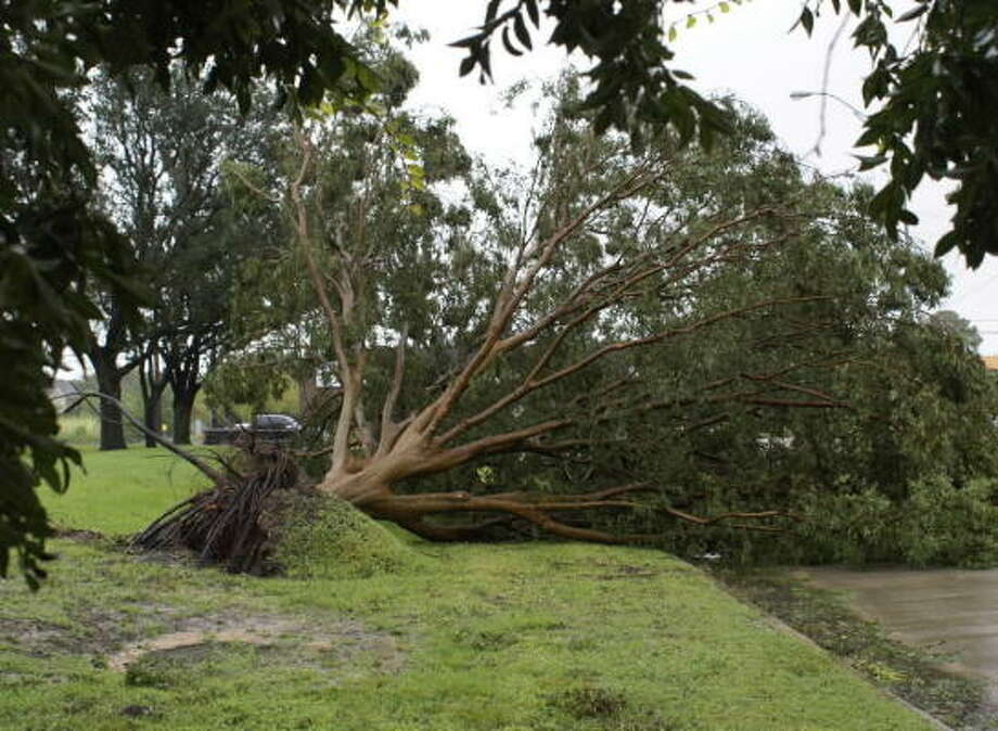 Trees fell by the thousands across Houston during Hurricane Ike. Photo: TradersVillage, Chron.commons Member