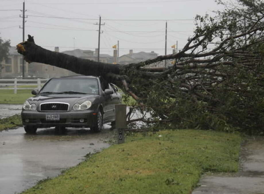 High winds from Hurricane Ike toppled a tree at the Traders Village RV Park. Photo: TradersVillage, Chron.commons Member