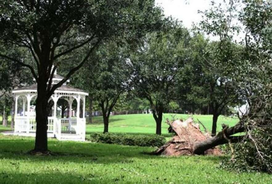 A tree is up-rooted from a Fairfield park in Cypress