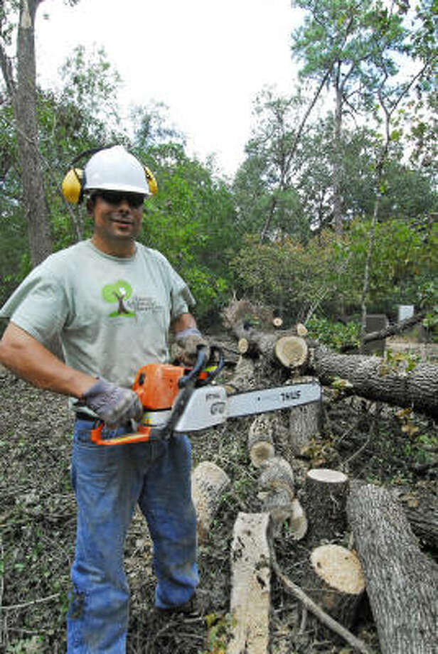 Naturalist Lucien Bouffard cuts up a fallen post oak at the Houston Arboretum & Nature Center. Photo: Tony Bullard, For The Chronicle