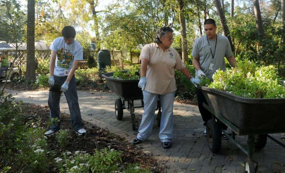 Juanita Torres, center, a Life Skills Job Coach for the Aldine ISD, helps students Patrick Hart, 21, right, of Houston, and Andrew Garza, 19, of Houston, clear plants in the Perennial Gardens. Photo: Jerry Baker, For The Chronicle