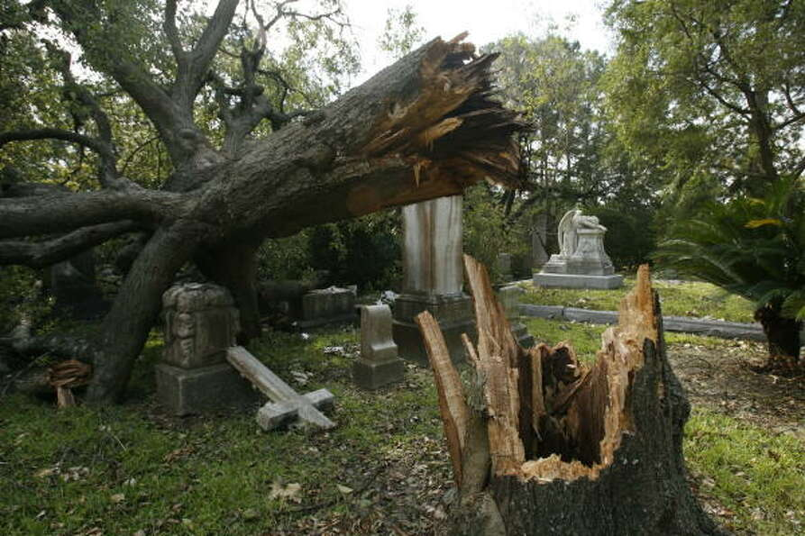 A downed live oak tree rests on gravestones at Glenwood Cemetery on Washington Ave. Sept. 18.