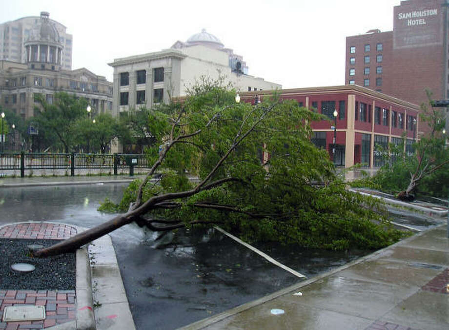 One of many trees that fell during Hurricane Ike's fierce passage through Houston. Photo: Luis Perez, Chronicle