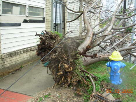 Winds from Hurricane Ike uprooted this tree along Houston Avenue near Washington Avenue. Photo: Jim Newkirk, Chronicle