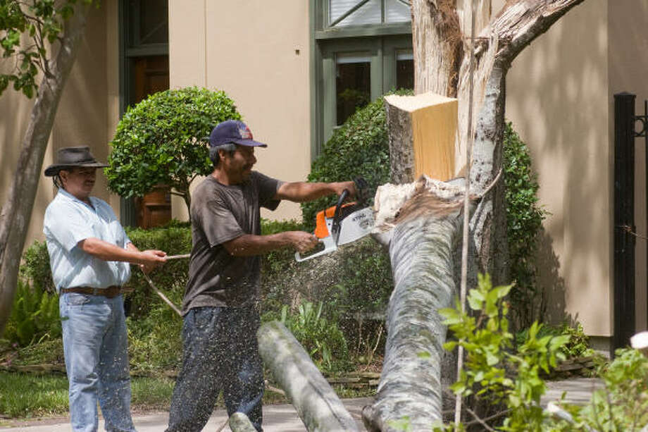 Mario Lopez and Saul Guerrero of Lopez Tree Service cut a split and fallen hackberry tree in the front yard of Lyle Morrow's house on Dartmouth. Photo: R. Clayton McKee, For The Chronicle