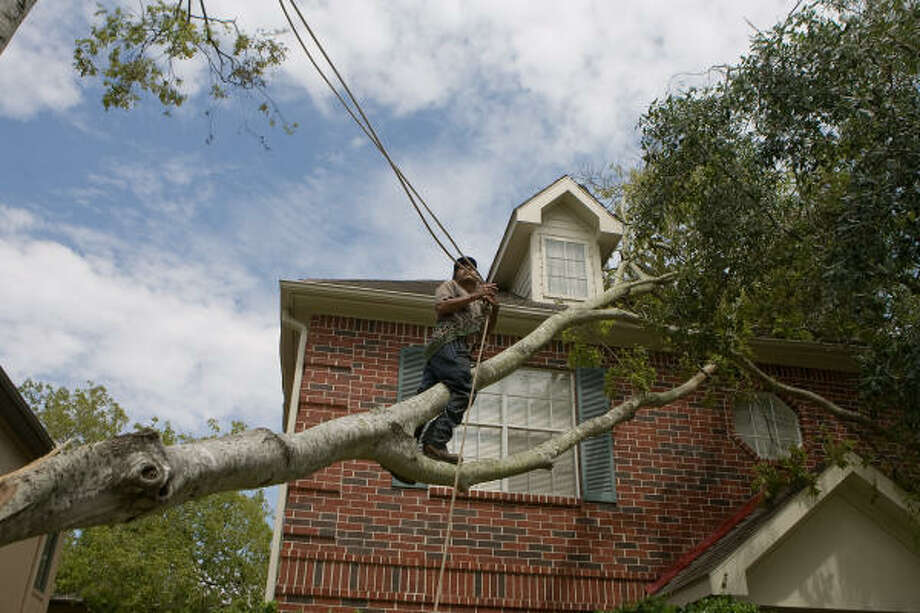 Saul Guerrero of Lopez Tree Service carries a rope out to control the fall of a split and fallen hackberry tree, which was being removed from the roof of Lyle Morrow's house on Dartmouth. Photo: R. Clayton McKee, For The Chronicle