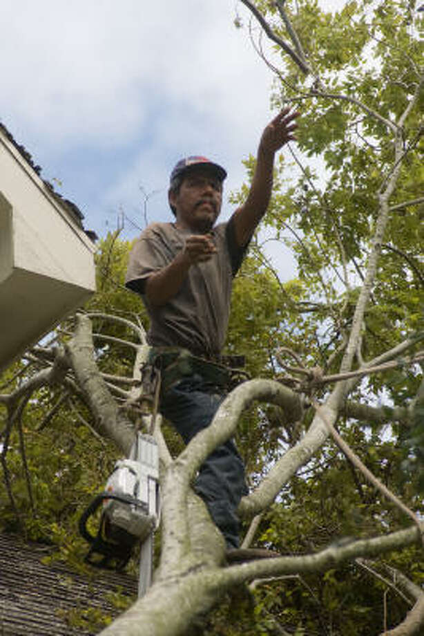 Saul Guerrero of Lopez Tree Service trims limbs from a split and fallen hackberry tree which Hurricane Ike landed on the roof of Lyle Morrow's house on Dartmouth. Photo: R. Clayton McKee, For The Chronicle