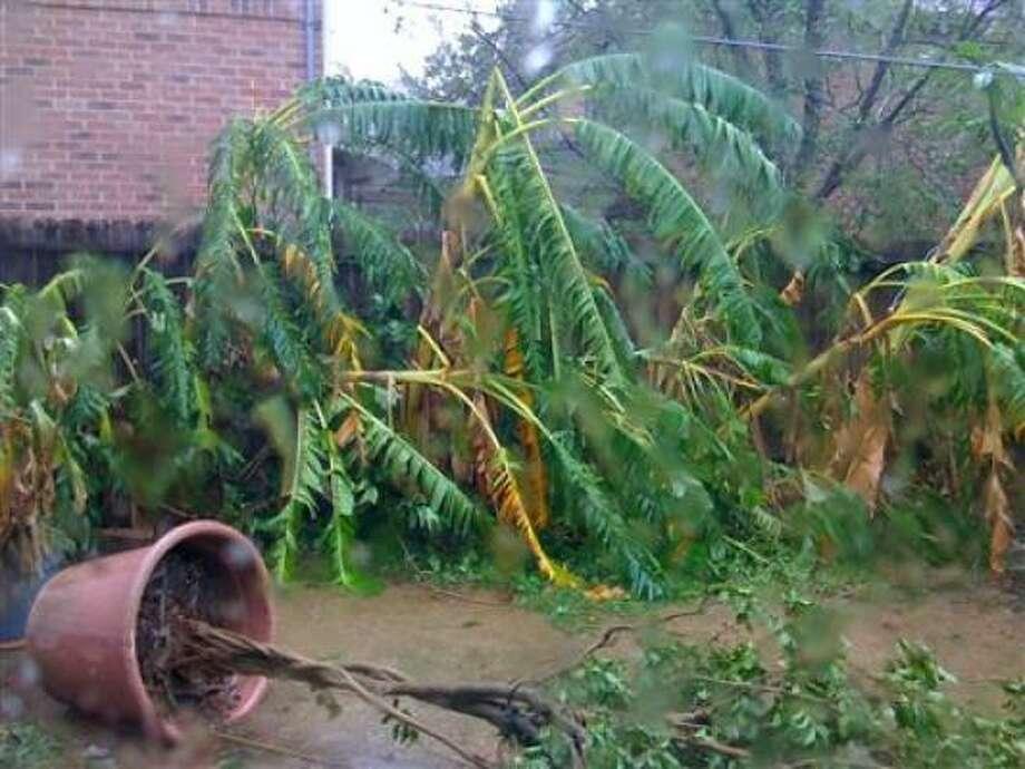 Damaged plants. Photo: 8bitter, Chron.Commons