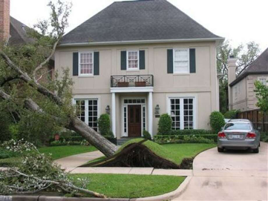 When this tree in West U blew over, it peeled away the lawn like a carpet. Photo: TexasADR, Chron.Commons Member