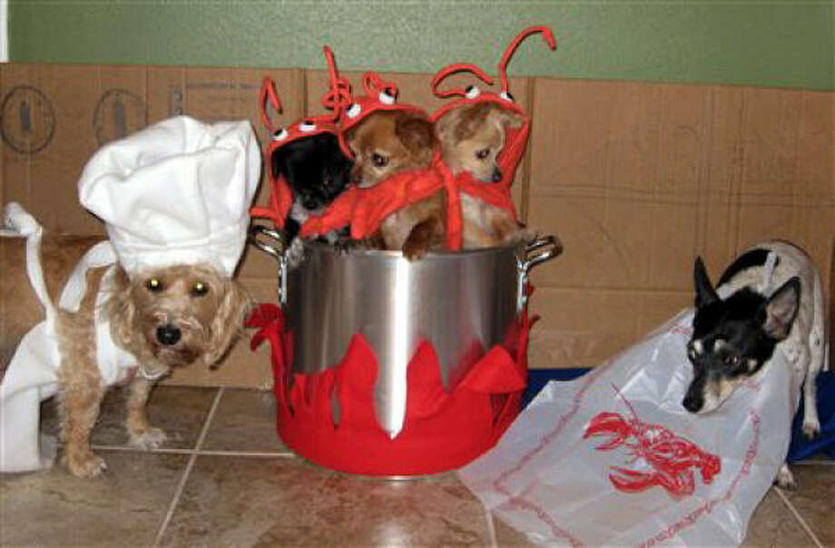First Place, winner of a $50 gift card from Academy: Lobster Dinner. From left are the chef, Bette; lobsters Elivs, Aretha and Jagger (a fourth lobster, Cher, jumped out of the pot); and the patron, Elton. Photo: Liladaye, PetsHouston