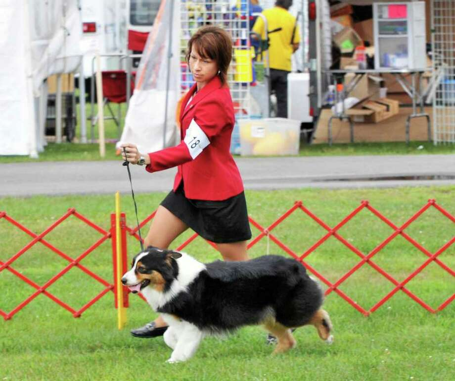 "Melissa Hammond of Glens Falls shows her Australian Shepherd ""Lyric"" during The Adirondack Spa Circuit Dog Show Saratoga County Fairgrounds in Ballston Spa Wednesday Aug. 10, 2011.   (John Carl D'Annibale / Times Union) Photo: John Carl D'Annibale / 00014106A"