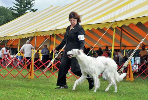 "Fran Wright of Westchester County shows her Borzoi ""Peyla""  during the Adirondack Spa Circuit Dog Show at the Saratoga County Fairgrounds in Ballston Spa on Wednesday, Aug. 10, 2011.   (John Carl D'Annibale / Times Union) Photo: John Carl D'Annibale / 00014106A"