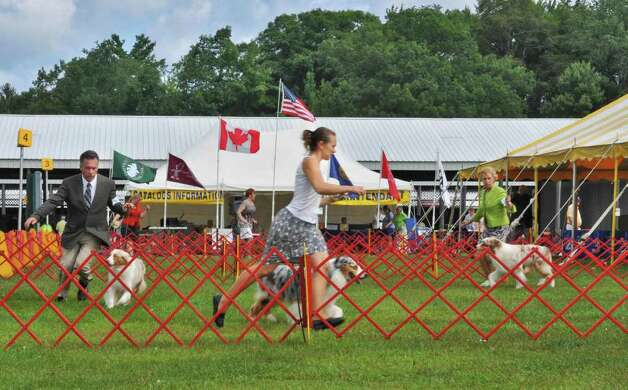 Handlers show their Australian Shepherds  during the Adirondack Spa Circuit Dog Show at the Saratoga County Fairgrounds in Ballston Spa on Wednesday, Aug. 10, 2011.   (John Carl D'Annibale / Times Union) Photo: John Carl D'Annibale / 00014106A