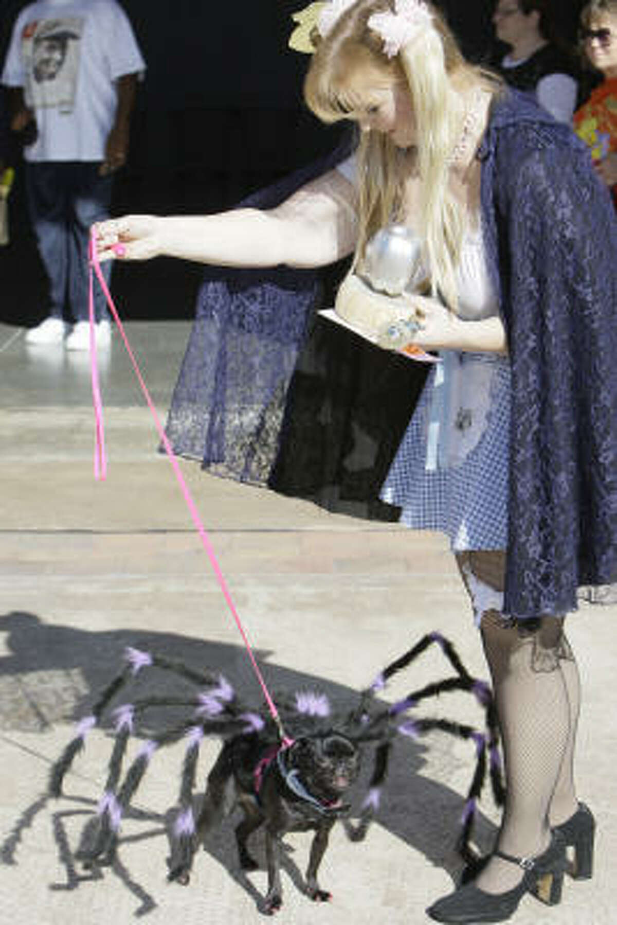 Wanda Chase and her miniature pug, Lucy, won second place as Miss Muffet and the spider who sat down down beside her.