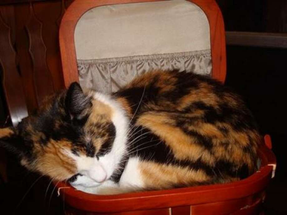 Cat in sewing basket. Photo: Destinyshadow128, PetsHouston