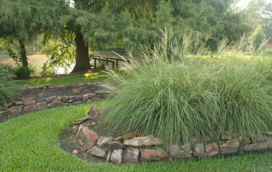 A bed of Miscanthus sinensis `Yaku Jima' tolerates not only Houston's wet, hot summer but also the periodic dry, hot conditions. Photo: Gary Fountain, For The Chronicle