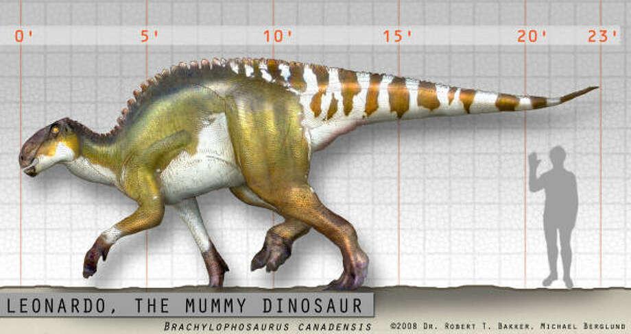 Meet Leonardo The Dinosaur Mummy Houston Chronicle