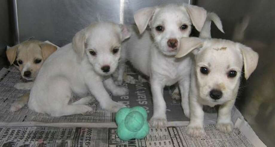 Biscuit, Cookie, Crumpet and Bagle Go to www.cap4pets.org. Photo: Citizens For Animal Protection