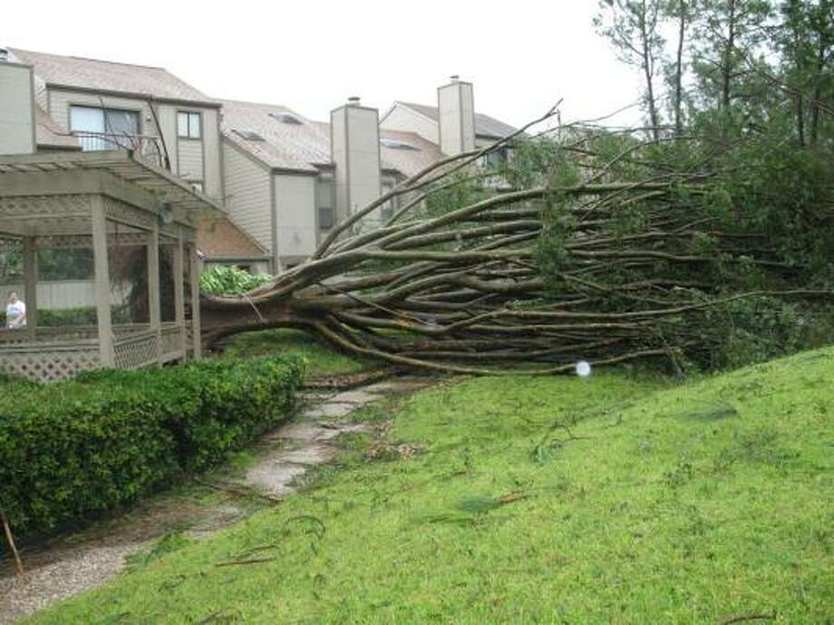 This tree was uprooted at Willow Hollow condos on Country Place Drive in Houston. Photo: Laura Weisman, Chronicle
