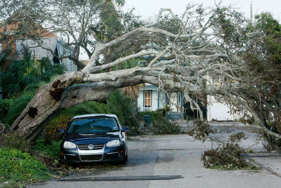 A tree hangs over a car after the storm without causing any damage to it on Sept. 15 in Galveston. Photo: Mark Wilson, Getty Images