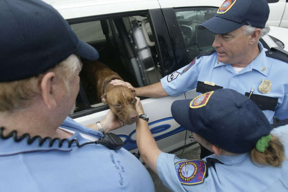 Surfside Beach Police Department officals, from left, Cpt. Gary Phillips, officer Brandy Gandy and Sgt. Danny Weis pet a dog named Bailey after they found him on Sunday, Sept. 14. Cpt. Phillips said the dog got away from him on Friday as he was conducting a rescue operation of two men and the dog during rising floodwaters. Photo: Julio Cortez, Chronicle