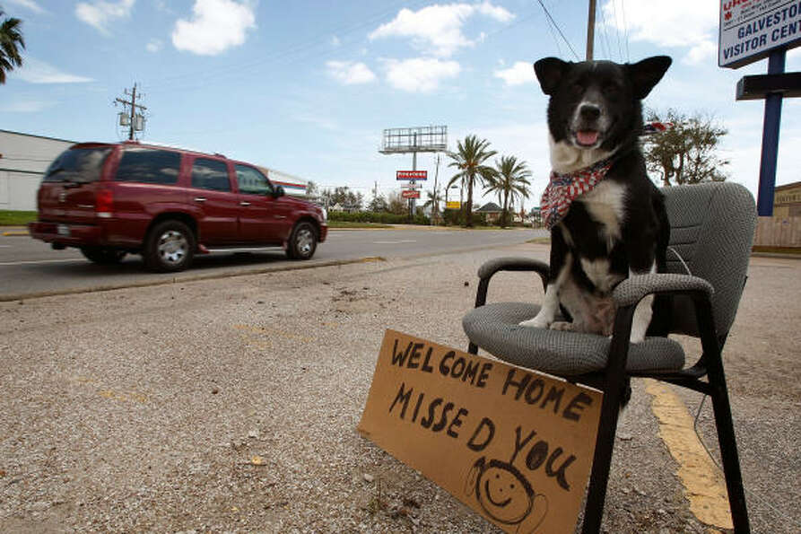 Lucky, a 6-year-old lab/collie mix, welcomes residents back to Galveston Island on Tuesday before th