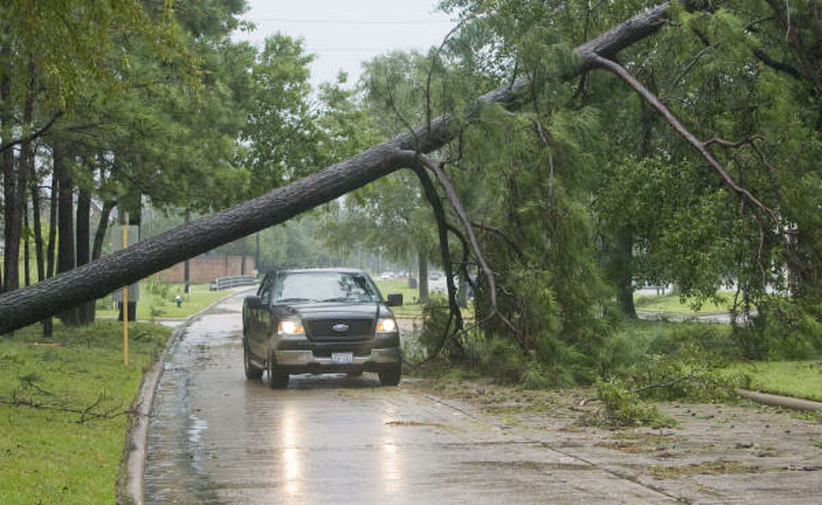 A tree creates a bridge over Cypresswood between Champion Forest and Stuebner Airline in north Harris County.