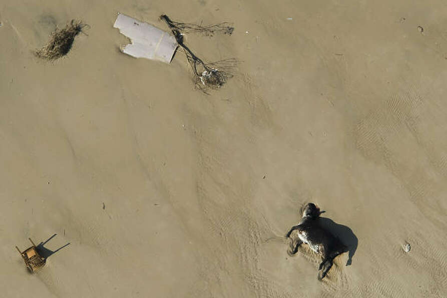 A livestock carcass lies amidst debris left by Hurricane Ike, Monday, Sept. 15, 2008, in Crystal Bea