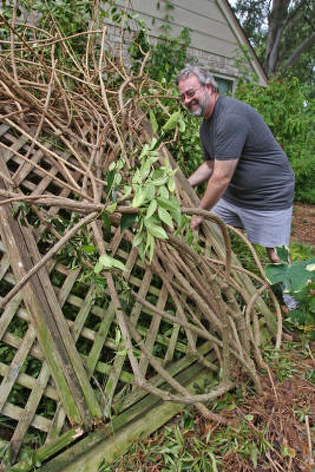 Phil Tournier, a Nottingham Country resident near the intersection of Langton Court and Laverton Drive, tries to up-right his trellis that was blown over near his house by Hurricane Ike. Photo: Suzanne Rehak, For The Chronicle