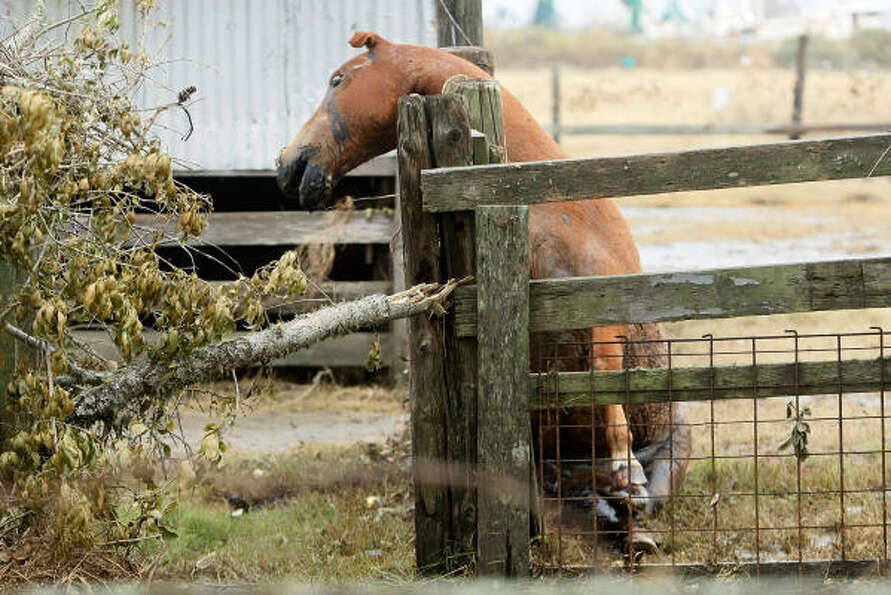 A horse that was left in its pin leans against a fence dead after not succeeding in trying to get to