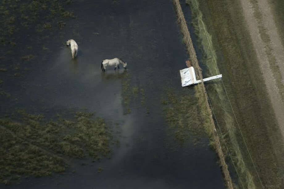 Horses stand in floodwaters left by Hurricane Ike on the Bolivar Penninsula Monday. Photo: Smiley N. Pool, Chronicle