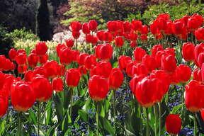 Victoria, B.C.:  Idyllic walking paths by the sea, an international ambience, beautiful  Butchart Gardens  and fabulous weather.