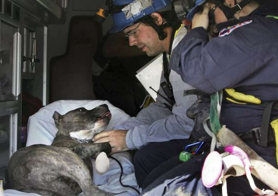Mark Snodgrass comforts rescue dog Doc, a pitbull, in the back of an ambulance after he cut his front paw on glass during search and rescue efforts by a FEMA task force in Galveston. Doc needed stitches. Photo: LM Otero, AP