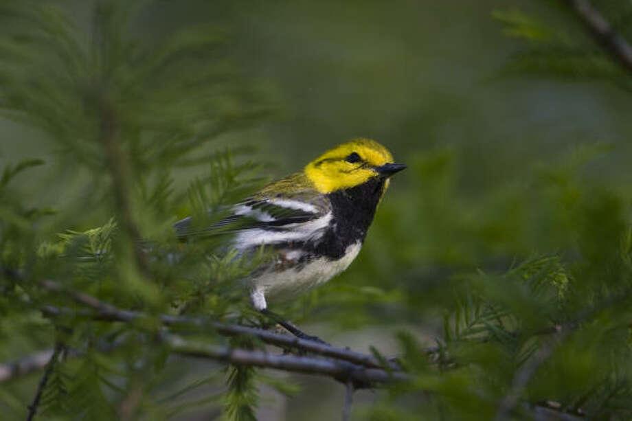 Hurricane Humberto destroyed large tracts of critical bird habitat, including the Houston Audubon Society sanctuaries at High Island. Photo: Kathy Adams Clark