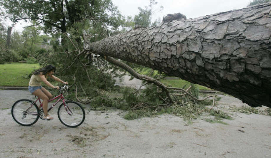 Loren Lopez, 15, bikes under an uprooted pine tree Sunday after Hurricane Ike went through a neighborhood in Houston. Photo: Marcio Jose Sanchez, Associated Press