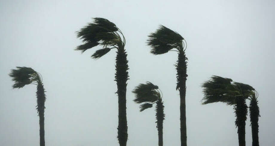 Palm trees stand against winds from Hurricane Ike today in Galveston. Photo: Matt Slocum, Associated Press