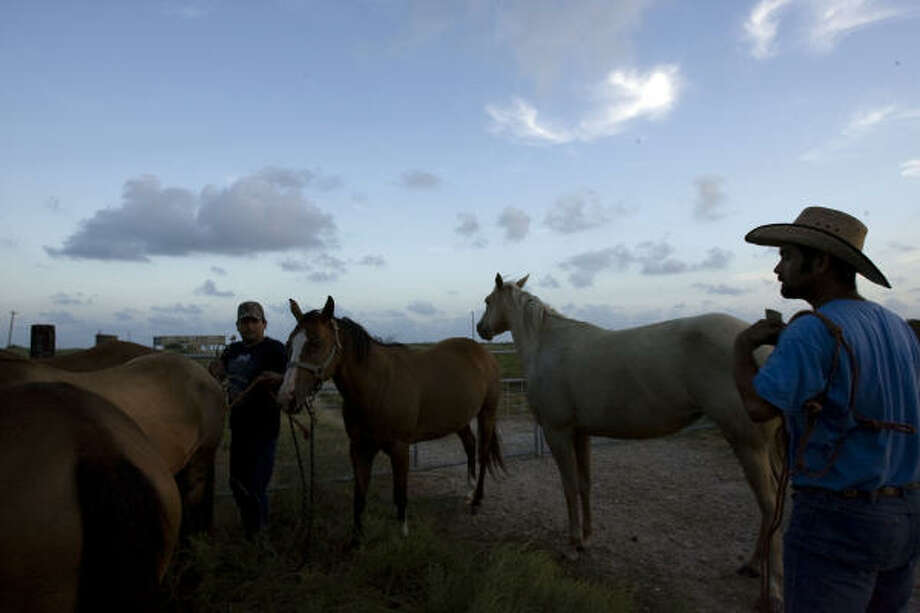 "Rey Villarreal (right) and Vincente Villarreal (left), prepare horses to be driven from Galveston up to Hitchcock on Sept. 10. ""You see it out there,"" Rey Villarreal said. ""This area floods, so we got to get them out."" Photo: Johnny Hanson, Chronicle"