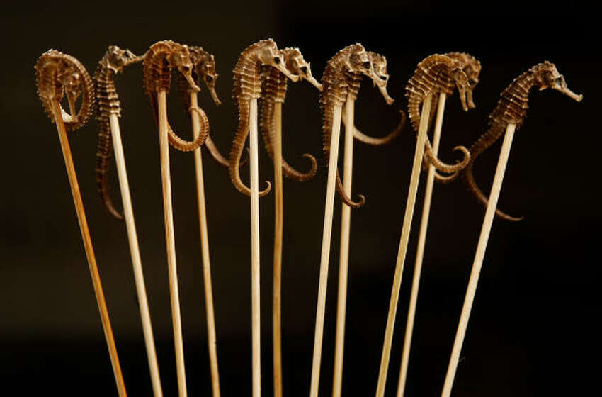 Seahorses on skewers at the Wangfujing market in Beijing, China.