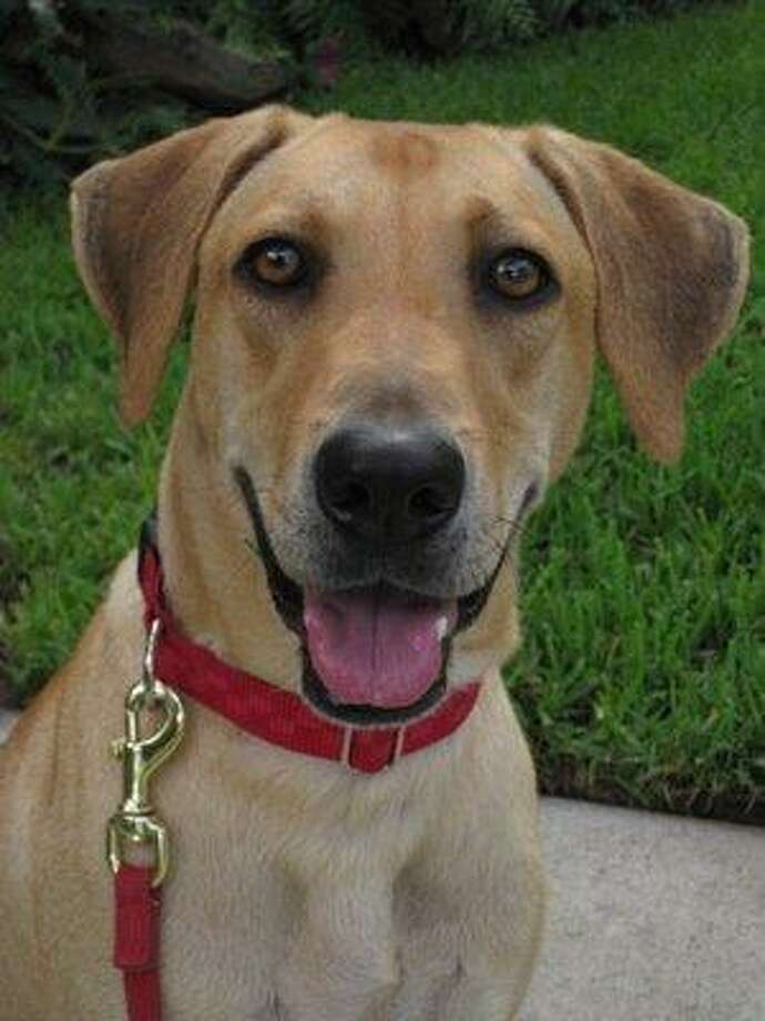 Adopt me:Lola is available from Scouts Honor Rescue.Get more info on Lola. Photo: Scouts Honor Rescue