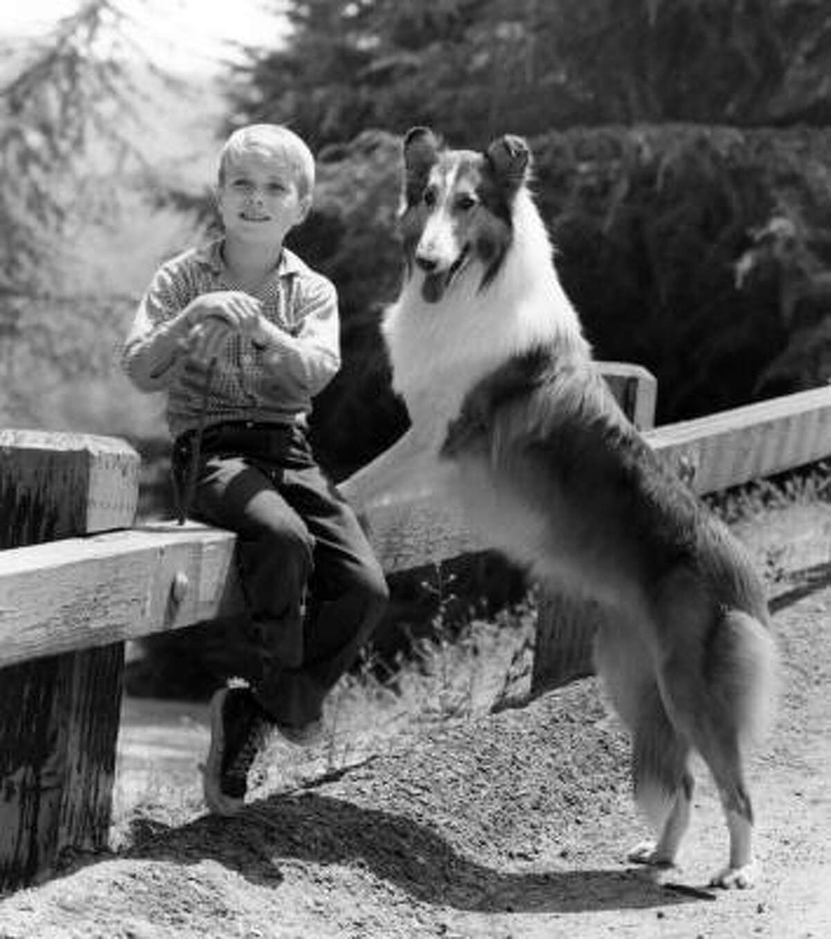 Lassie: This series that followed the adventures of a collie and her human companions ran for 17 seasons, and aired 547 episodes on CBS. (CBS)