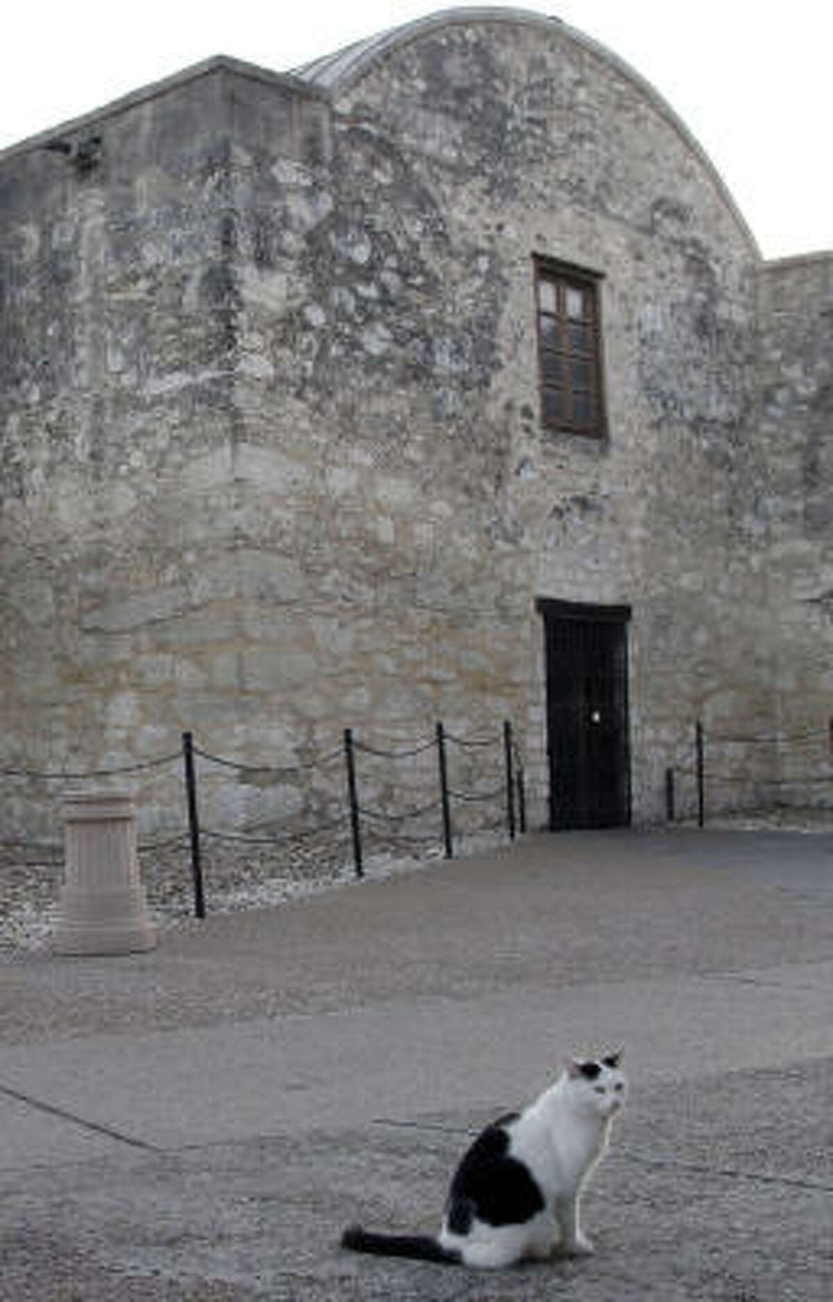 Clara Carmack, aka C.C., the Alamo Cat, resides at Texas' most well known landmark, the Alamo.